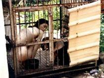 Caged dog slave