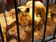 Fucking of wild jaguar