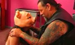 Spanked pig