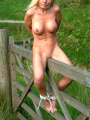 Fence like wooden pony