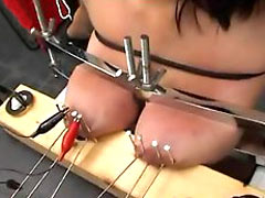 Tits nailed to board